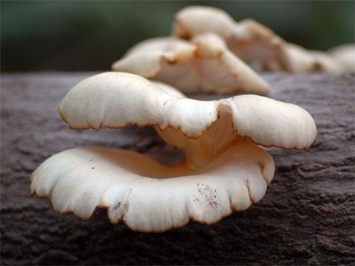 TripodGirl_mushrooms2_500