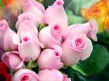 TripodGirl_rose_bouquet500