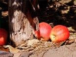 bad_apples